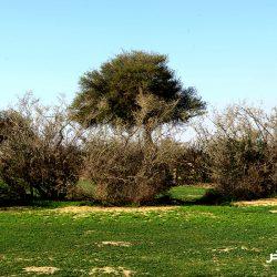 محمية الملك عبد العزيز الملكية